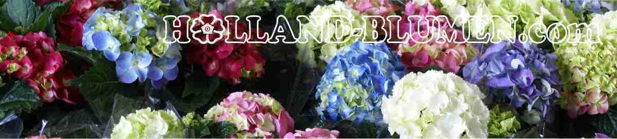 Holland-BlumenCom