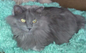 Melrose Road Area of RM of Springfield - Missing Since Sept. 21