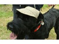 THE HERTS FESTIVALS OF DOGS