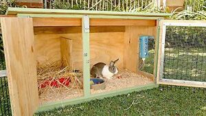 Baled hay/straw & pine shavings delivered 4 your small animals Stratford Kitchener Area image 6