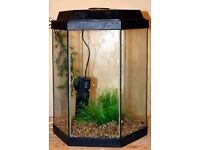 2 fish tanks