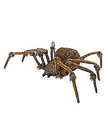 WANTED: 8foot wolf spider