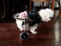 DogWheelchair Health Care for Big Pat 50 lbs 212050