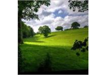 Meadow landscapes