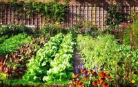 Do you have land suitable for growing vegetables.