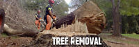 Professional and highly recommend, tree cutting and removal.