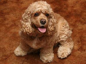 Famille recherche jeune chien a donner