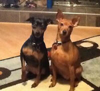Roxy and Zoey- Lovely female bonded pair