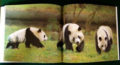 BRAND NEW Full Color Giant Panda Pictures Book Great Gift For All Occassions!!
