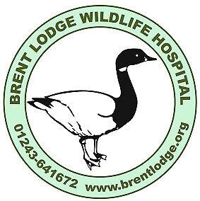 Brent Lodge Bird & Wildlife Trust