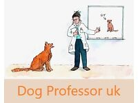 Professional Dog Training - puppy classes, one to one sessions, walk, talk and train