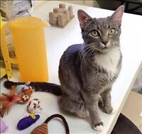 """Young Female Cat - Domestic Short Hair: """"Autumn"""""""