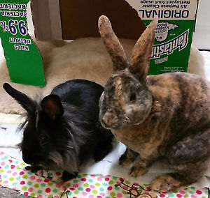 These two RABBITS need a GOOD home!