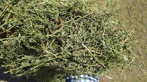 Straight alfalfa hay for sale