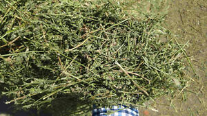 Straight alfalfa hay for sale