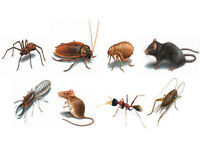 Cheap pest control £50 for all treatments for a 3 bedroom house