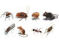 Cheap Pest Control £50 cockroaches, mice and bedbugs for a 3 bed house