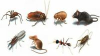 Call 647 886 7173 pest control services at discounted rates