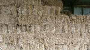 **GRASS HAY** GOOD QUALITY** THIS SEASONS** 150 SQUARE BALES** Burnie Burnie Area Preview