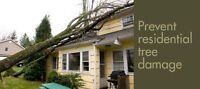 Tree Removal & Pruning 647-656-8324 BEST PRICES