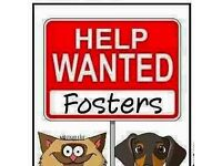 volunteers needed for local dog charity