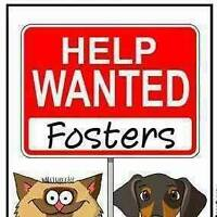 Foster homes needed for cat and dog rescue!