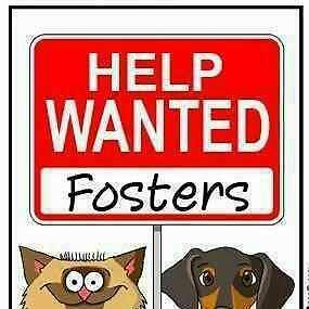Foster homes needed for dog rescue!