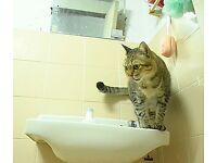 2 years old indoor cat