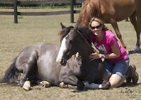 Volunteers Needed - Touch of Haven - Horses Healing Humans