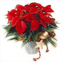 12th Annual Port Franks Poinsettia Tour Craft Show and Tea Room