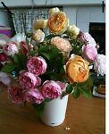 roselady80504