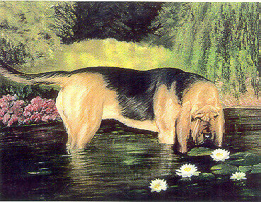 Bloodhound Art Print by USA Artist Barbara Walker Lily Sniffer*