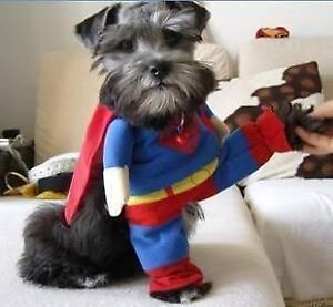Halloween Costume for your pet