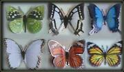 3D Craft Butterflies