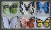 3D Craft Butterflies