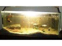3 ft and half fish tank