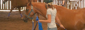 HORSE RIDING/DRESSAGE LESSONS and Horse grooming services!