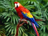 Looking for Scarlet Macaw