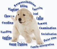 Puppy and Dog obedience class