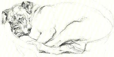 Boxer in a Basket - Vintage Dog Print - Poortvliet