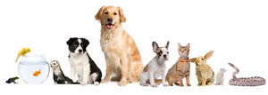 Pet Sitter Kitchener / Waterloo Kitchener Area image 1
