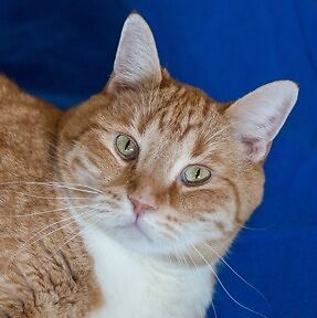MEOW Foundation's Handsome Fritz Seeks Loving Home