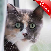 MEOW Foundation's Beautiful Bess Seeks Shy Cat-experienced Home