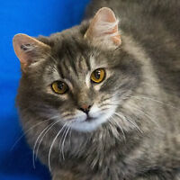 MEOW Foundation's Lucky Lady Looking for a Loving Home!