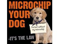Microchipping Micro Chip Kittens Puppies Dog Cat