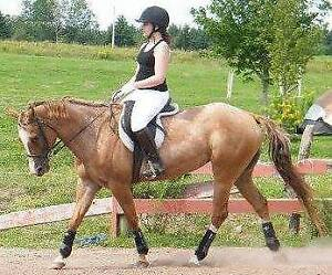 Part lease on beautiful appy mare