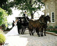 Horse and Carriage for weddings and special occasions