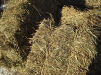 Small bales of hay suitable for horses/sheep in Ayrshire/ Renfrewshire