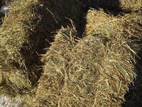 Small bales of good quality horse hay - Ayrshire/ Renfrewshire
