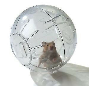 Wanted Hamster Ball / Wheel